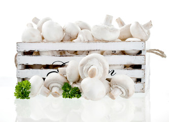 champignon on white background