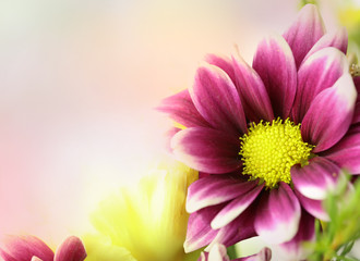 Colorful pink, purple and yellow flowers with an area for text.  Horizontal.