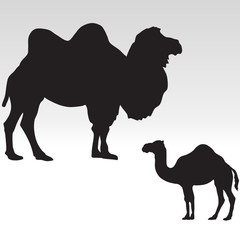 camel silhouettes. Bactrian and dromedary vector illustration