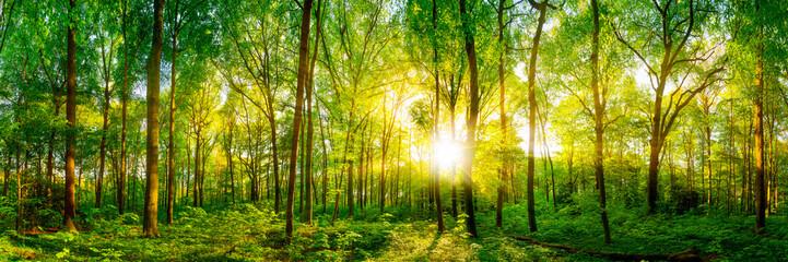 Wald Panorama im Sonnenschein