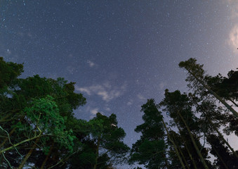 Clear night sky full of stars framed by trees