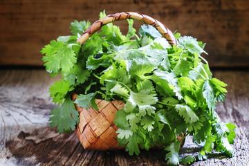 Fresh cilantro in a wicker basket, vintage wooden background, se