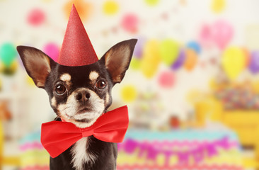 Funny cute dog celebrating his birthday party