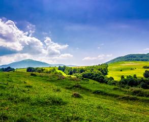 trees near meadow in mountains  on hillside under cloudy sky