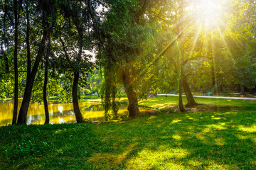 trees near a pond in city park at sunset