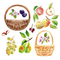 Watercolor fruit, berry and wicker basket set