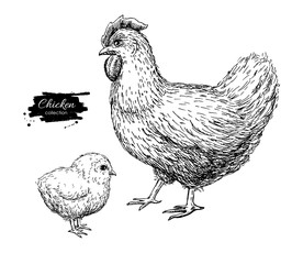 Vector vintage hand drawn chicken and baby chick. Engraved  illu