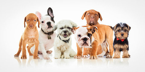 six cute puppy dogs of different breeds standing together