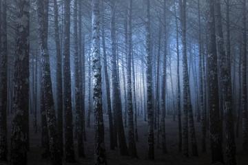 Mysterious foggy pine at dusk