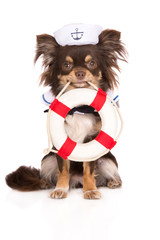 dog in a sailor hat holding a life buoy