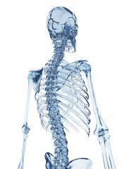 Skeletal structure, Illustration