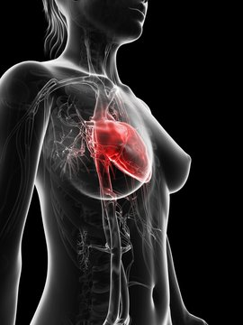 Illustration of human body highlighting the heart on black background