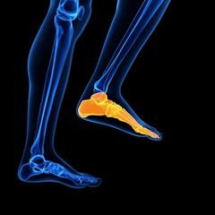 Human foot bones, illustration