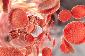 Red and white blood cells, illustration