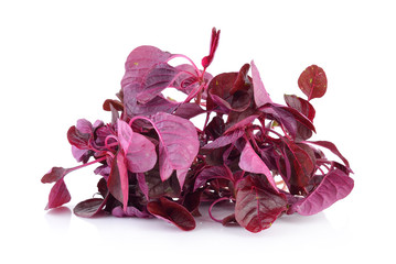 red spinach on a white background