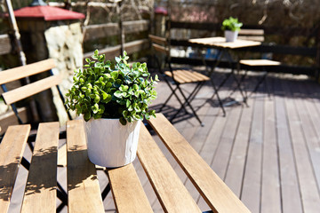 Pot with plant in open-air cafe on sunny day