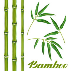 Set of bamboo plants and leaves. Objects for decoration, design on advertising booklets, banners, flayers