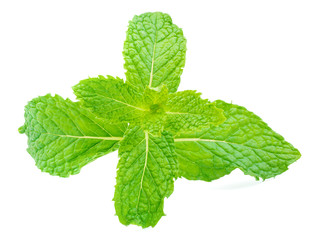 close up shot on herbal mint leaf isolated