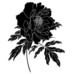 Vector monochrome peony flower isolated on white background. Element for design. Vector.