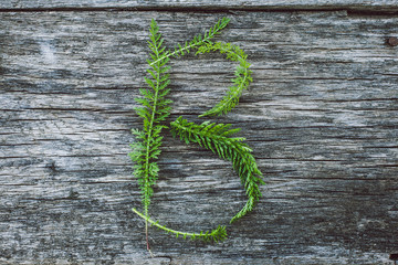 Letter B from yarrow leaves on an old wooden surface, the English alphabet