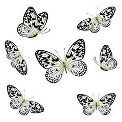 Stylized Butterflies Flying