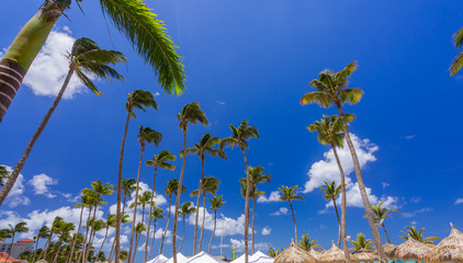 Bungalows and blue sky with palms