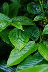 Closeup green leaves