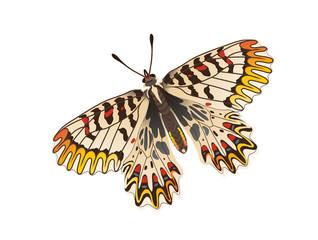 Osterluzeifalter Schmetterling,  Vektorgrafik freigestellt