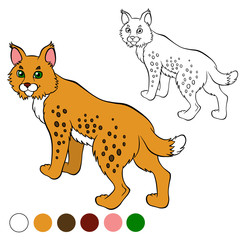Coloring page. Color me: lynx. Cute beautiful lynx stands and sm
