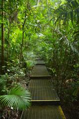 Path in Daintree National Park Queensland, Australia