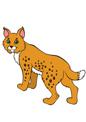 Cartoon wild animals for kids. Cute beautiful lynx stands and sm