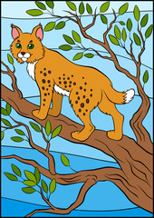 Cartoon wild animals for kids. Cute beautiful lynx stands on the