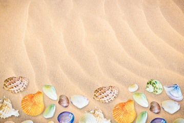 collection of seashells background