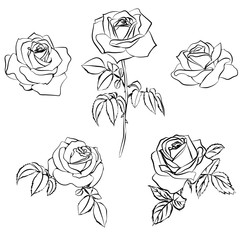 Set Rose sketch.