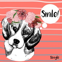 Vector close up portrait of beagle dog girl, wearing the flower wreath. Hand drawn domestic pet dog illustration. Isolated on pantone`s Peach echo background with grey stripes.