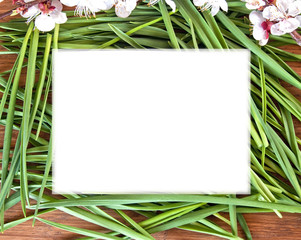 white frame on the grass background