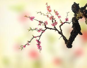 plum blossom on old antique vintage paper background