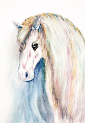 watercolor hand drawn white horse