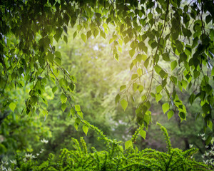 Arch of green leaves.