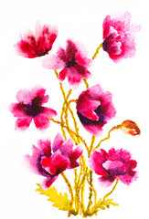 watercolor pink poppies floral composition
