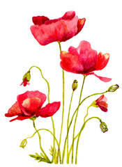 red poppies watercolor handmade painting