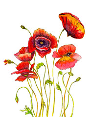 hand painted poppies with watercolor brush strokes and ink