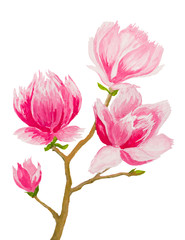 pink magnolia twig on white