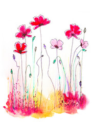 watercolor and ink hand drawn illustration of poppies on white