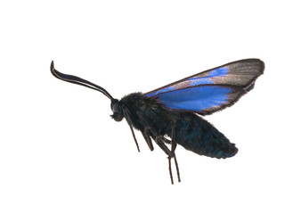 flying blue and black batterfly