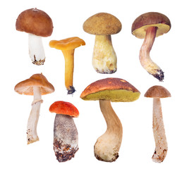 set of eight edible mushrooms on white