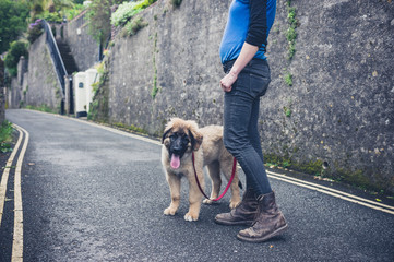 Young woman in street with Leonberger puppy
