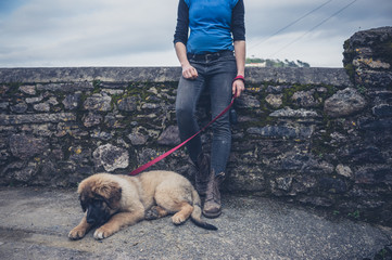 Woman by wall with Leonberger puppy