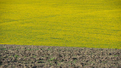 plowed field and sunflowers