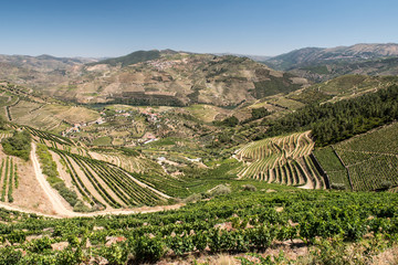 Douro Valley and Vineyards